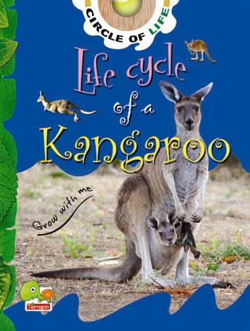 Circle of Life: Life Cycle of a Kangaroo