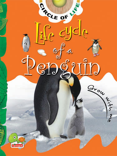 Circle of Life: Life Cycle of a Penguin