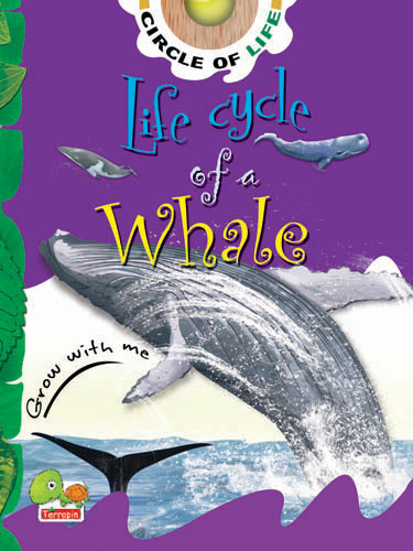 Circle of Life: Life Cycle of a Whale