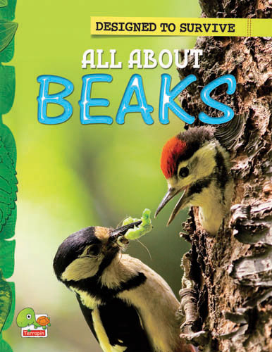 Designed to Survive:  All About Beaks
